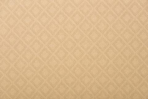 Paragon Dove 145188 0001(1)